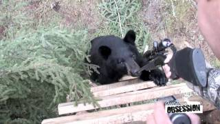 Download Bear chews on gun!!! Video