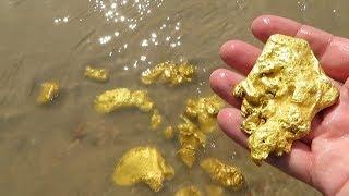 Download А вы думали что, много золота вокруг нас, это надо видеть и собирать. Video
