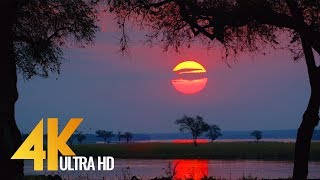 Download 4K Wild Animals - Africa, Mana Pools National Park with Nature Sounds - 4 HRS Video