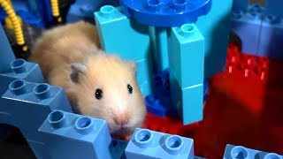 Download Hamster Lego Obstacle Course – Escape from the Castle! Video