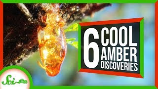 Download 6 of the Coolest Things We've Found in Amber Video