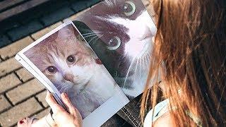 Download 興味深い検証!オス猫が可愛い鳴き声でオス猫を呼ぶ?猫の定説が覆るか Video