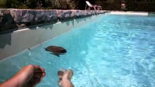 Download Hedgehog Rescue - seen through Google Glass Video