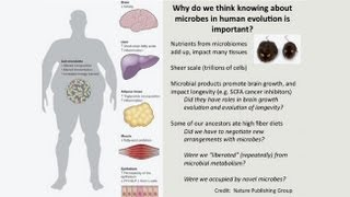 Download CARTA: The Evolution of Human Nutrition - Steven Leigh: Diets and Microbes in Primates Video