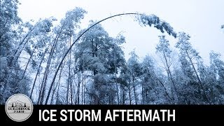 Download What Happened AFTER the Ice Storm? Off Grid Aftermath Video