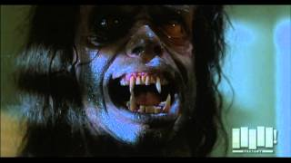Download Werewolf transformation - The Howling (1981) Video