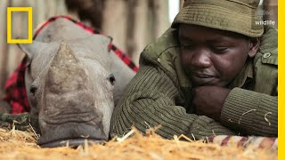 Download Meet the Heroes Who Protect the Last Northern White Rhinos in the World | Short Film Showcase Video