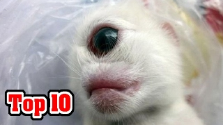 Download Top 10 MOST SHOCKING Animal Mutations Video