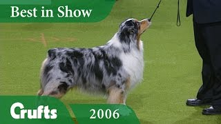 Download Australian Shepherd Wins Best In Show at Crufts 2006 | Crufts Dog Show Video
