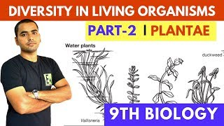 Download DIVERSITY IN LIVING ORGANISMS | PART-2 | PLANTAE Video