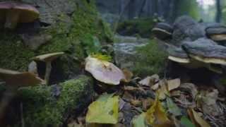 Download Filmpremiere ″Zurück zum Urwald - Nationalpark Kalkalpen″, ORF-OÖ-Heute Beitrag Video