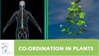 Download COORDINATION IN PLANTS Video