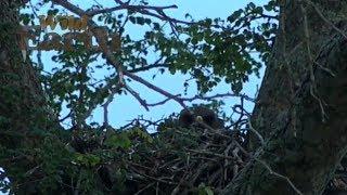 Download WildEarth - Sunrise Safari - January 8, 2020 Video