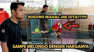 Download TERNAK BURUNG INI BISA BIKIN KAYA!!! Video