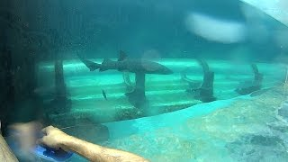 Download Shark Tank Water Slide at Atlantis Video