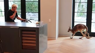 Download FIGHTING OFF WILD KANGAROO THAT BROKE INTO OUR HOUSE (real footage) Video