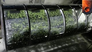 Download Mars exploration: NASA develops lunar greenhouse to grow vegetables on the Moon and Mars - TomoNews Video