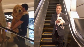 Download The Dangers of Dogs on Escalators Video