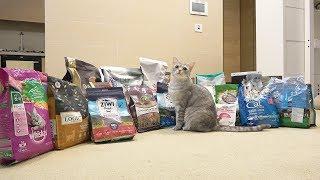 Download 티티 고양이에게 엄청난 선물이 도착했어요 Video