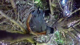 Download Incredible time lapse of birds nest. Video