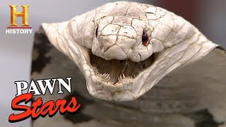 Download Pawn Stars: Taxidermy Cobra for sale...or Not? | History Video