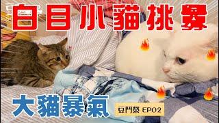Download 【豆鬥榮 EP02】這隻貓哪一天真的會被揍扁的(? Video