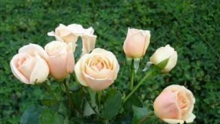 Download Dogum Günün Kutlu olsun Canim Annem Video