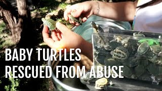 Download Baby Turtles Given a Second Chance (Turtle Rescue) Video
