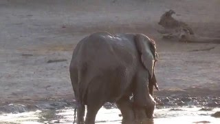 Download This adorable baby elephant didn't want to finish bath time. Video