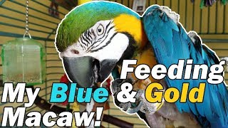 Download FMPF: My macaw is a little spoiled... Video
