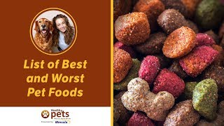 Download Dr. Becker Shares Her Updated List of Best and Worst Pet Foods Video