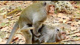 Download How to breed monkey in zoon Video
