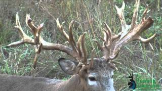 Download 322 Inch Whitetail Buck with a Crossbow in Alabama! Video