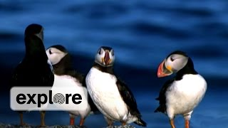 Download Project Puffin, 40 Years of Seabird Restoration Video