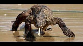 Download Komodo Dragons! Kamp Kenan S3 Episode 2 Video