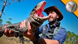 Download Reptilian Invaders in Florida! Video
