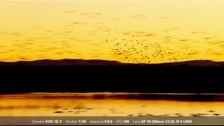 Download Canon: Bird Photography with Arthur Morris: Sunrise and Sunset Blurs and Silhouettes Video