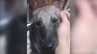 Download Abused Dog Feels For the First Time Petting Instead of Abusing Video