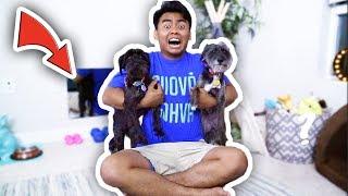 Download EXTREME DOG ROOM MAKEOVER! Video