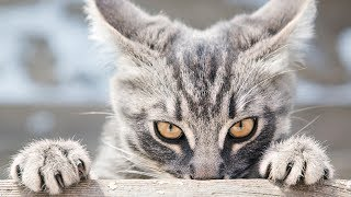 Download Funny Stalking Cat Video Compilation Part 2 Video