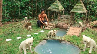 Download Building Dog Playground and Build Mini Swimming pool for Dogs Video