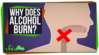 Download Why Does Alcohol Burn When You Drink It? Video