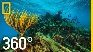 Download 360° Underwater National Park | National Geographic Video