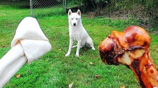 Download Do Dogs Like Bones or Rawhide Bones? Video