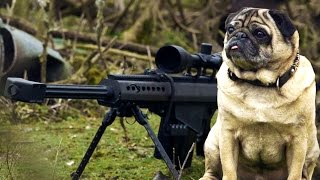 Download Sniper Pug Video