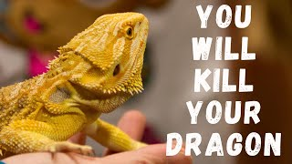 Download Don't Feed Mealworms To Dragons! Video