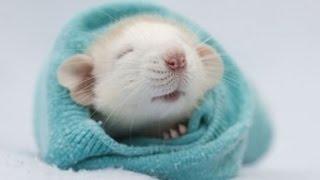 Download Harvard Scientists REVERSE Aging In Mice. People Next... Video