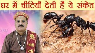 Download घर में चीटियों का आना देता है ये संकेत | Tips to get rid of Ants | Boldsky Video