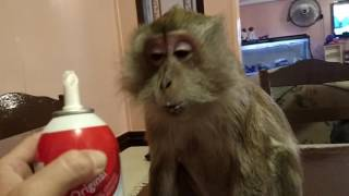 Download My Monkey Likes Her Reddi Wip By The MOUTHFUL Video