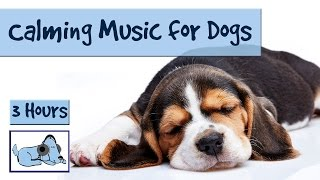 Download 3 and a Half Hours of Calming Music for Dogs! Video